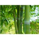 Edredón Nórdico Bagés Textil con fibra de Bambú