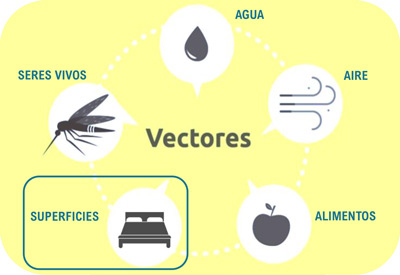 Vectores de transmisión de Coronavirus y Bacterias
